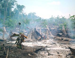 konversi lahan hutan